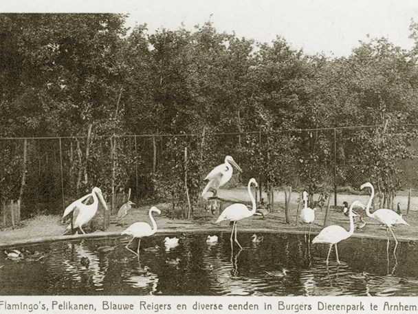 Burgers' Zoo relocated to Arnhem (1923)