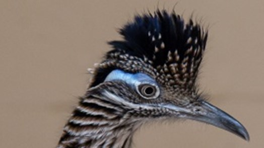 Europe's finicky roadrunners are speed dating in Arnhem