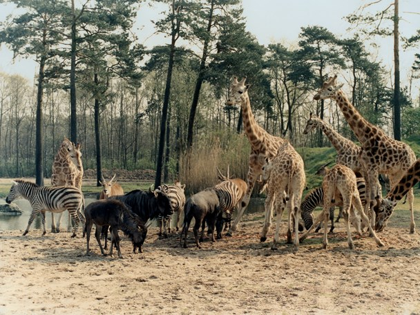 The first safari park in Europe